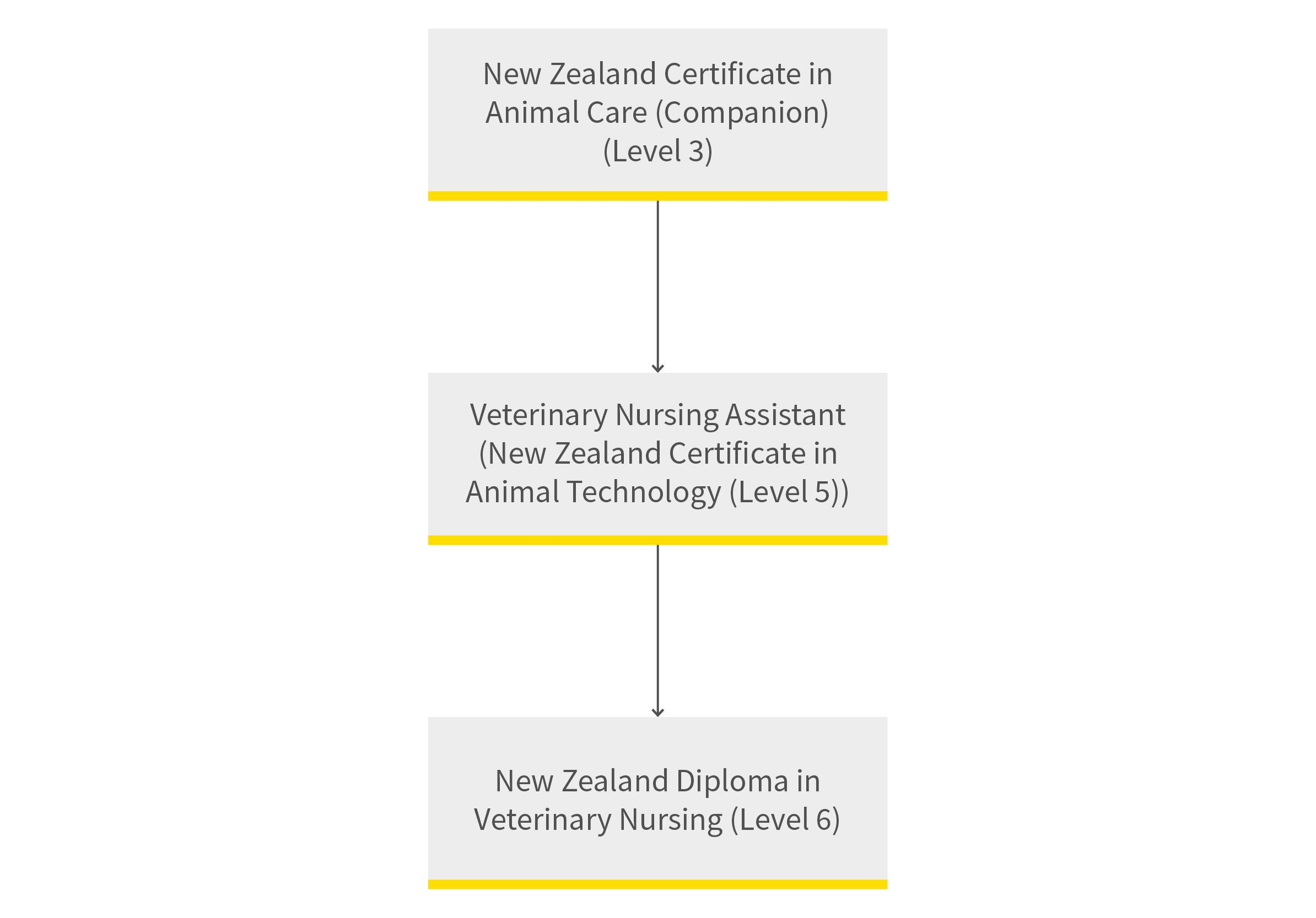 Veterinary nursing pathway diagram