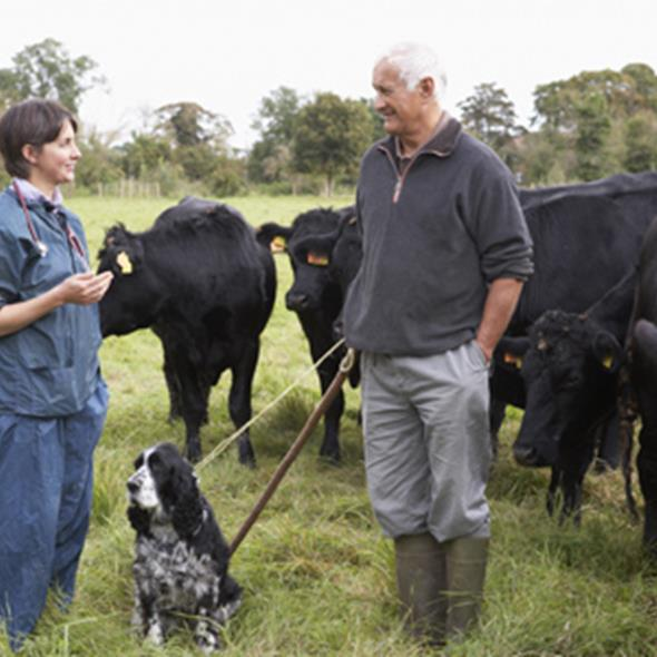 Vet speaking to farmer in a field with cows and a dog