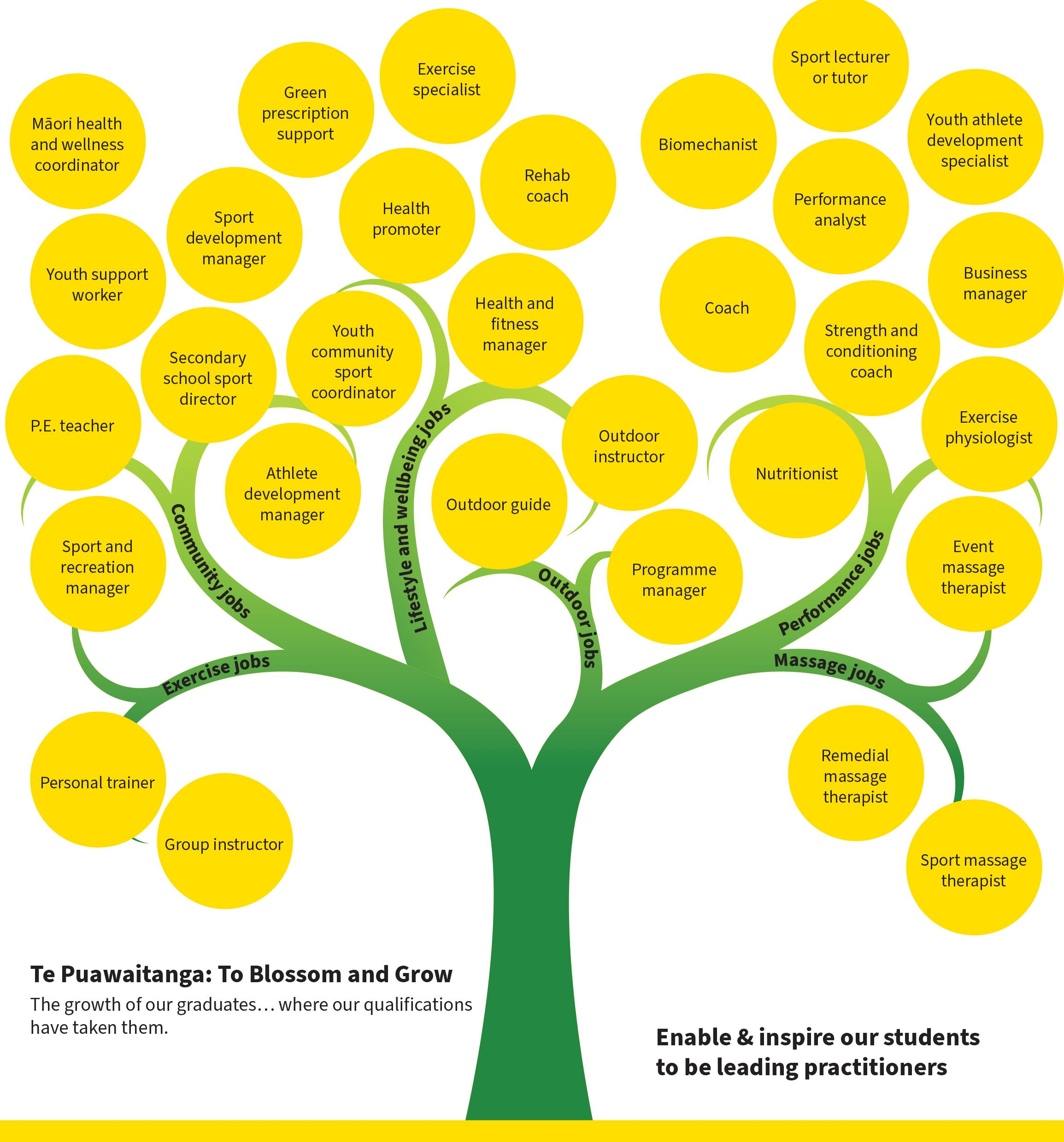 Graduate Sport Tree representing different employment opportunities in the field of sport science