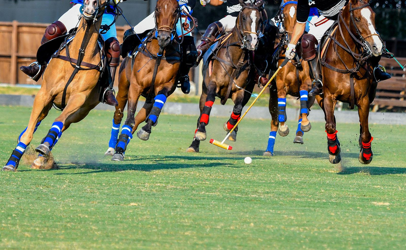 close up of horses in polo match