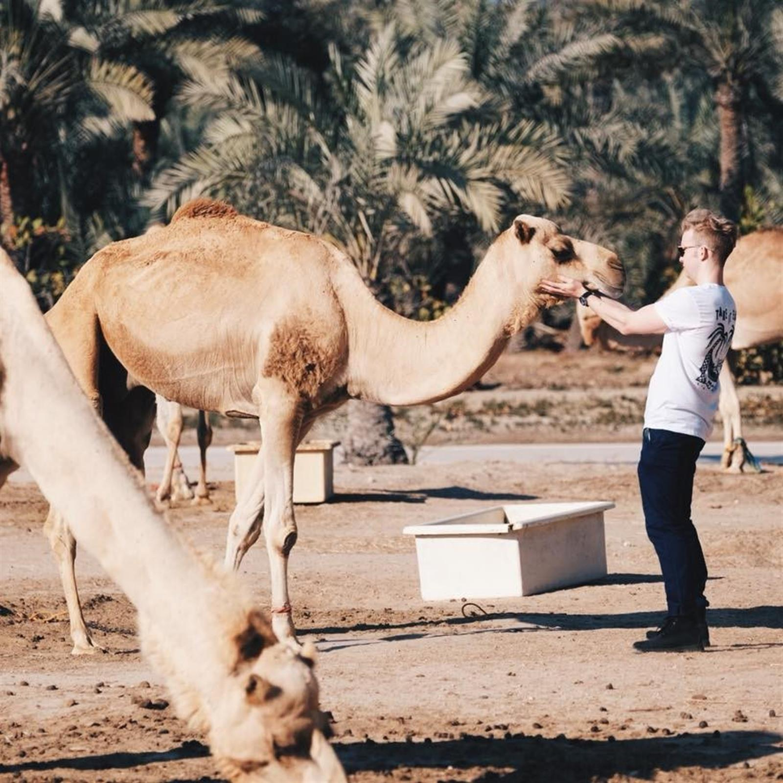 Joel in his backyard at a Bahrain camel farm
